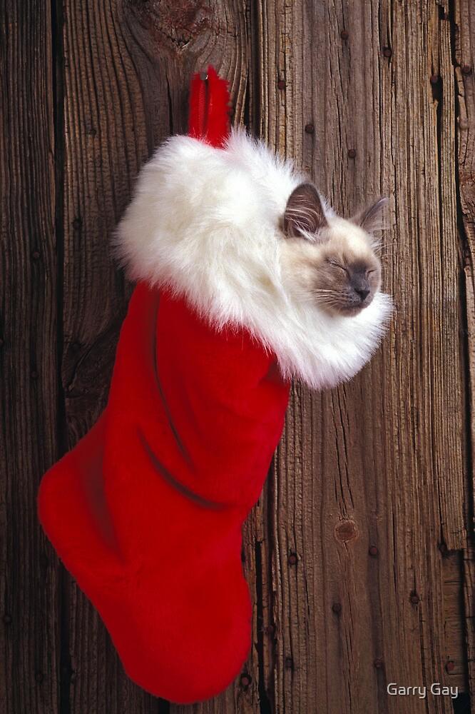 Kitten in stocking by Garry Gay