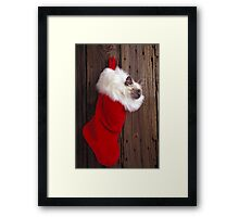 Kitten in stocking Framed Print