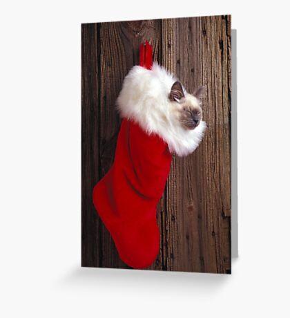 Kitten in stocking Greeting Card