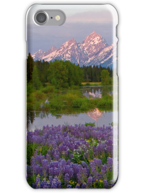 Lupine Explosion in the Tetons (iPhone4 Case) by A.M. Ruttle