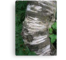 Stripey Bark Canvas Print