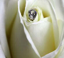 Diamond Rose by Maggie Lowe