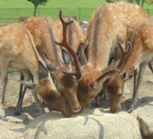 Feeding deers Sticker
