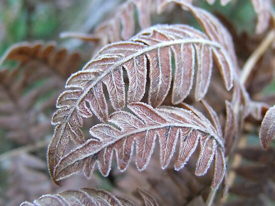 Frosted Ferns by Tracy Faught
