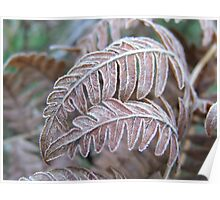 Frosted Ferns Poster