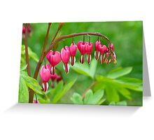 Bleeding Heart flower (Dicentra spectabilis) Greeting Card