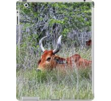 Horned Cow in Saltgrass iPad Case/Skin