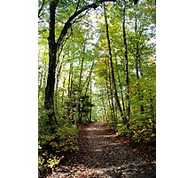 Cottage Road 2 - Sharbot Lake, Ontario Photographic Print