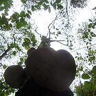 Fungis upstairs. by alaskaman53
