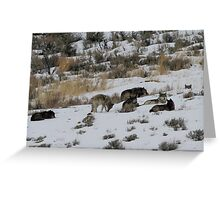 The Pack at Rest Greeting Card