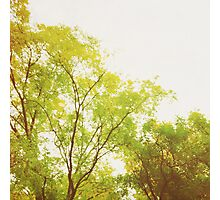 Lime Coloured Tree Photographic Print
