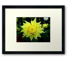 Star Flower Framed Print