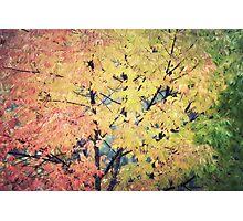 Autumn's color Photographic Print