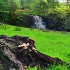 Yorkshire: The Fungi & The Waterfall by Rob Parsons