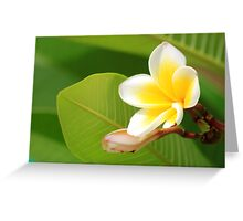 Plumeria  - JUSTART ©  Greeting Card