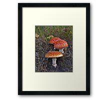 Fly agaric mushroom Framed Print