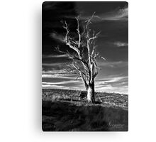 Living Wood Metal Print