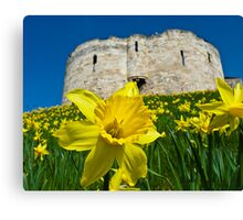 Daffodils by Clifford's Tower, York Canvas Print