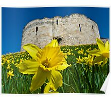 Daffodils by Clifford's Tower, York Poster