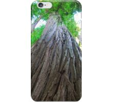 Big Red Woods iPhone Case/Skin