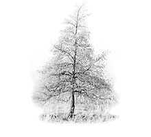 Tree- iPhone Case by Lea Valley Photographic