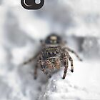 White Spider by jude walton
