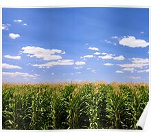 Crop Dusting - Top of a Corn Field Poster
