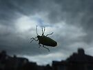 Bug on my Window by Artberry