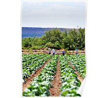 Hard Days Work - Farm in New Mexico Poster