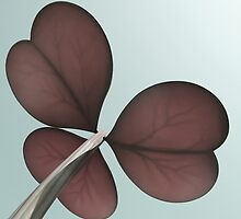 4 leaf clover by vinpez