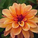 Last Bloom by TyTheTerrible