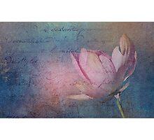Textured Lotus Photographic Print