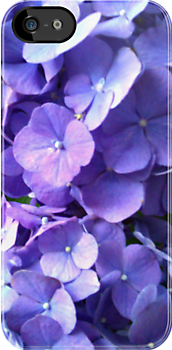 Blue Hydrangea iPhone Case by Betty Mackey