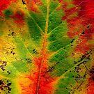 Leaf by © Joe  Beasley IPA