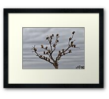 The Answer To How Many Vultures Can Sit On a Tree is... Framed Print