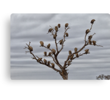 The Answer To How Many Vultures Can Sit On a Tree is... Canvas Print