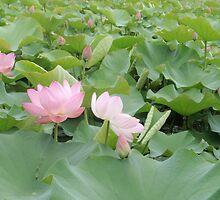 ubud lilies by Rae Stanton