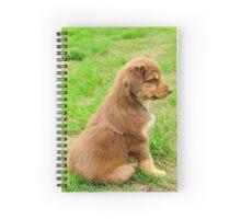Red TriColor Australian Aussie Shepherd Puppy Spiral Notebook