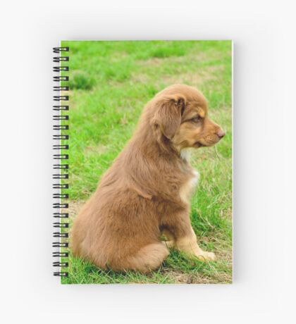 Red TriColor Australian Aussie Shepherd Puppy Spiral Notebook
