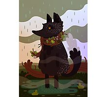 Black Fox in the Rain Photographic Print