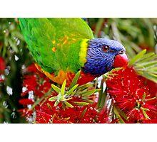 Pure Nectar Photographic Print