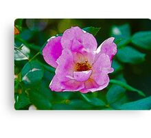 Purple Flower Canvas Print