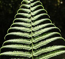 tree fern by Rae Stanton