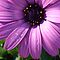 *Feature Page/Macro - Enchanted Flowers*