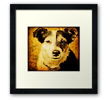 a dear little dog Framed Print