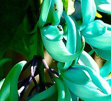 Jade Vine Spider V's Wasp - Gavins Arboreatum, Cairns, Australia by asskwoo