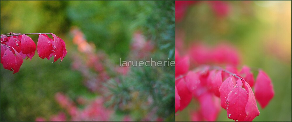 If you truly love nature, you will find beauty everywhere - Vincent Van Gogh by laruecherie