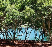 Trees at Water's Edge by AuntDot