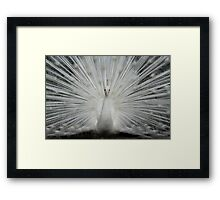 Princess Peacock Framed Print