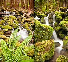 Sol Duk Rain Forest, Olympic National Park, Washington by Chris Rusnak